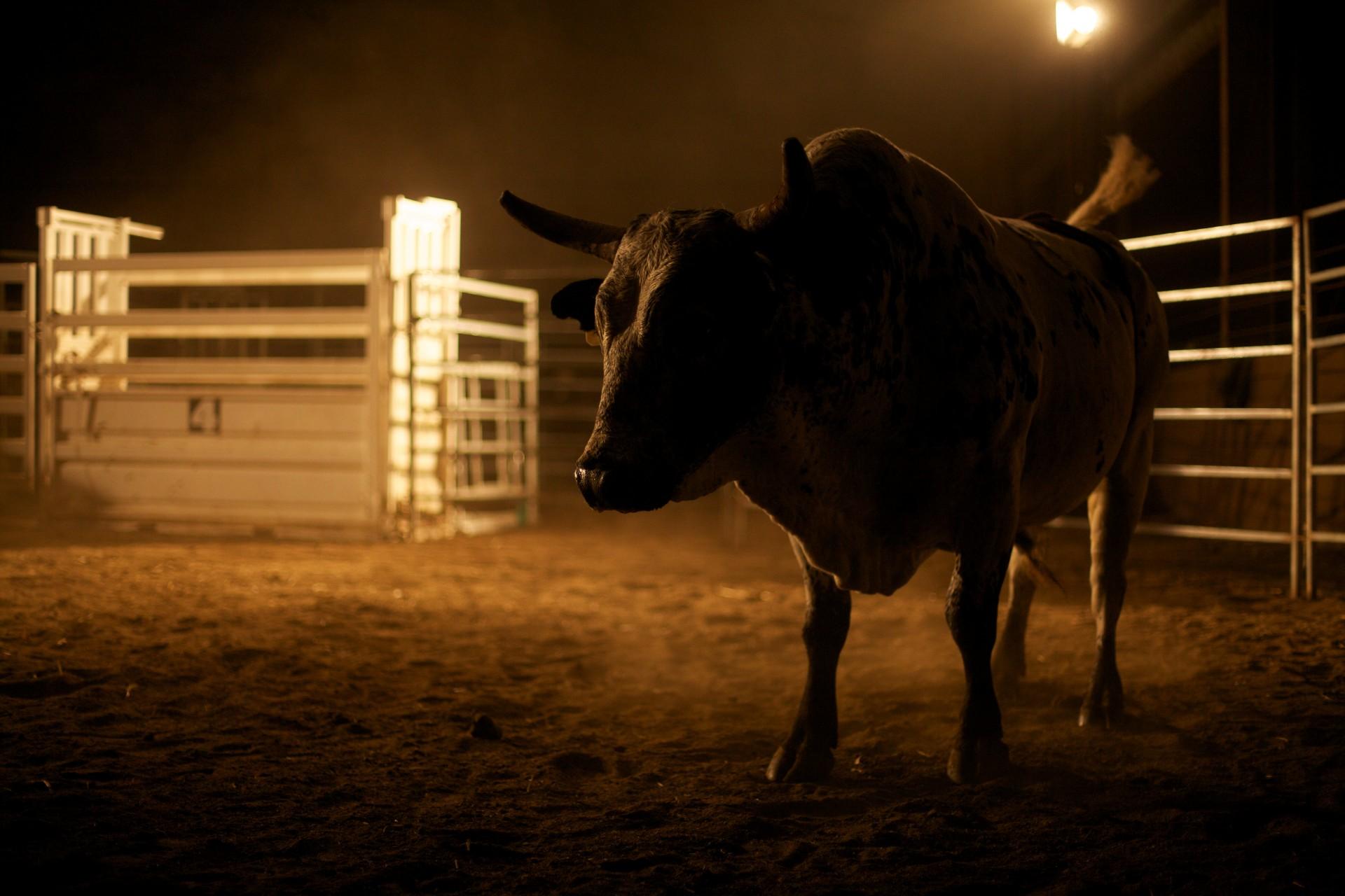 ITP Rodeo Shoot Stills 120